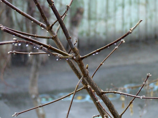 branches under a rain