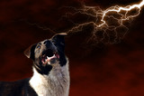 dog and lightning poster