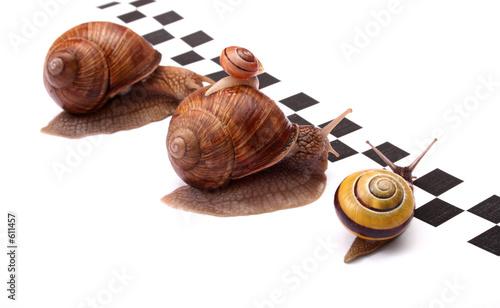 snails racing - 611457