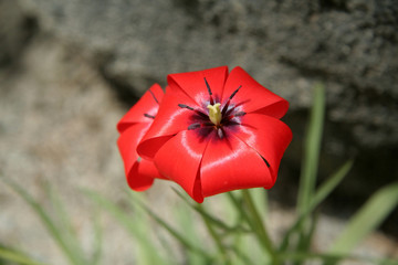 red flower against dark background
