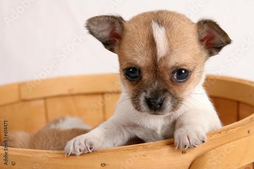 popup puppy