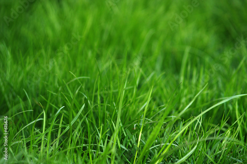 green fresh grass