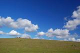 sheep grazing on the hillside poster