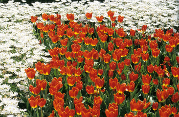 red and white flower gardens