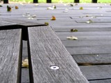 empty bench and falling leaves poster