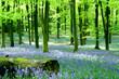 Fototapeten,blume,woodland,wald,log