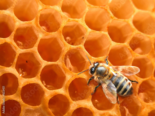 Foto op Canvas Bee bee on honeycomb