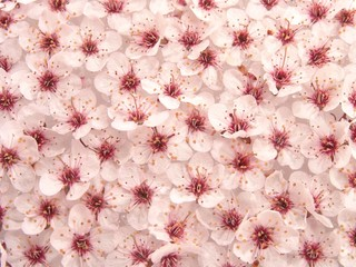 plum flowers pattern 1