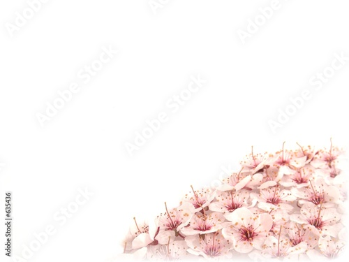 plum flowers template iii