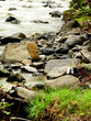 river and stone