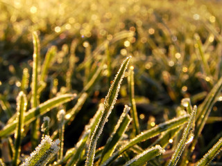 grass on soft morning light