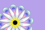 lilac background with camomile poster
