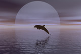 dolphin and moon poster