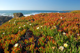 springtime coastal meadow poster