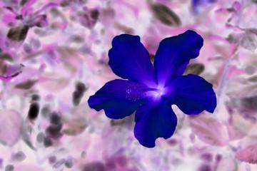 hibiscus - psychedelic