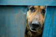 roleta: german shepherd dog house guard