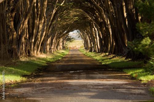tunel-cyprysowy