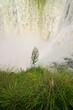 flora and falls