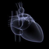 heart x-ray 1 poster
