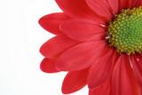 red flower - 660642