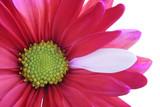 Fototapeta kwitnąć - kwiat - Kwiat