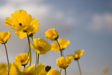 beautiful wild flowers: yellow 3