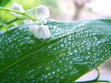 Fototapete Blume - Frische - Blume