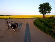 fahrrad mit rapsfeld