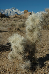 cactus and mt. whitney
