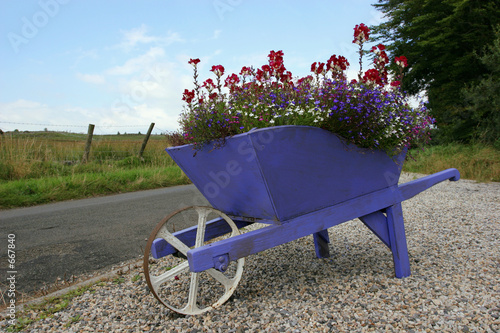 wheelbarrow beauty