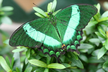 sparkling green butterfly