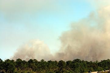wildfire1
