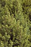 breed fir poster