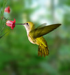 roleta: hummingbird