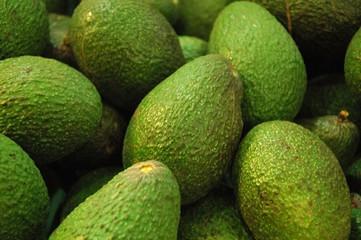 the avocado patch