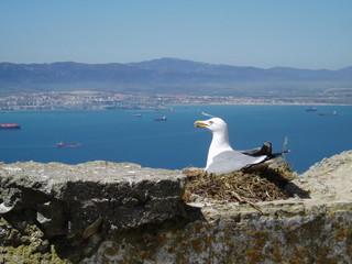 seagull in nest