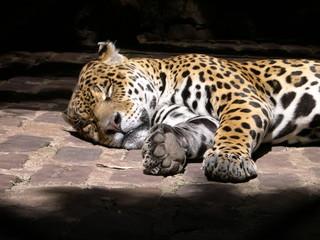 jaguar en zoológico