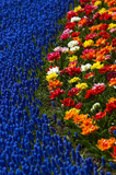 flower bed with bright colors poster