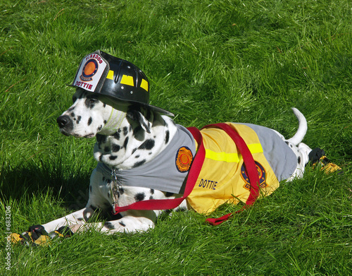 dalmation - fire department mascot