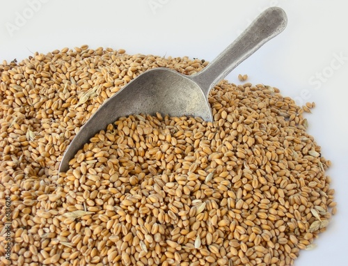wheal grains and shovel