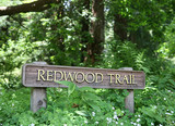 redwood trail (focus on redwood on sign) poster