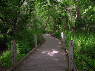 wildwood lake sanctuary boardwalk
