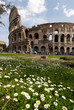 flowers and colosseum