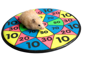 hamster on the dartboard