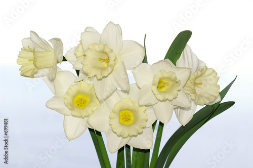 bouquet of narcissuses on a white background