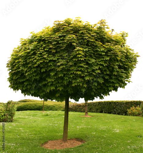 arbre detoure