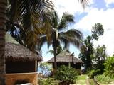 case en paille, village exotique, pieds de cocos poster