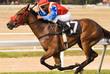 horse racer #17