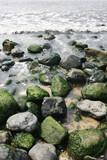 moss on rocks poster