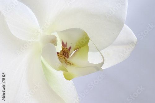 In de dag Orchidee white orchid peace